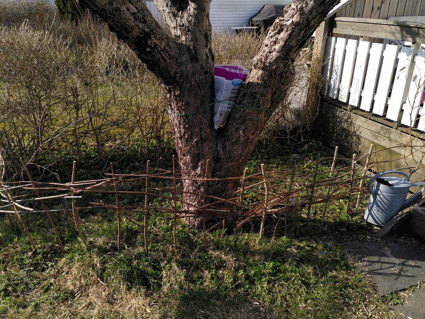 in the apple tree there is a planting container made out of a rice sack