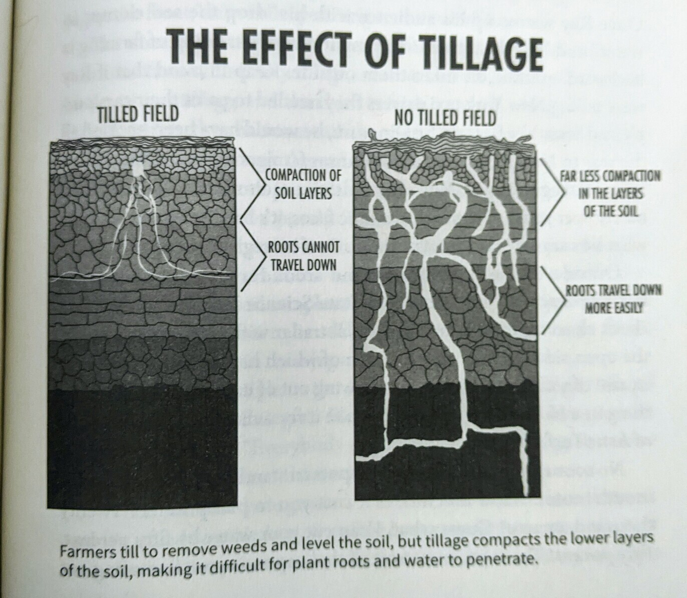 A graphic showing how tillage increases soil compaction, making it difficult for roots to penetrate.